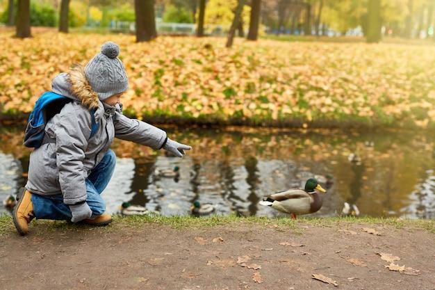 Walk after duck