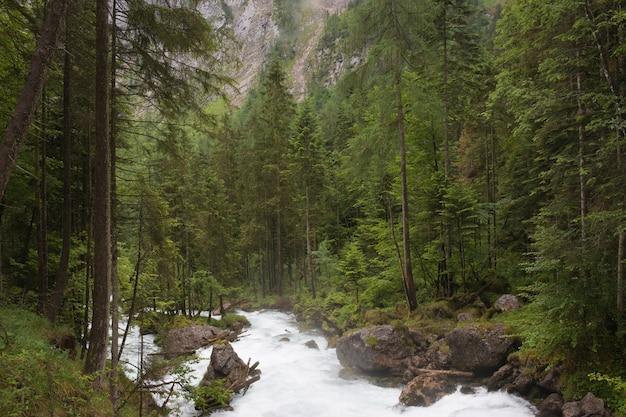 ハルシュタット、オーストリア、ヨーロッパの深い森の中を歩きます。豊かで深い緑の松の周り。雨の夏の日