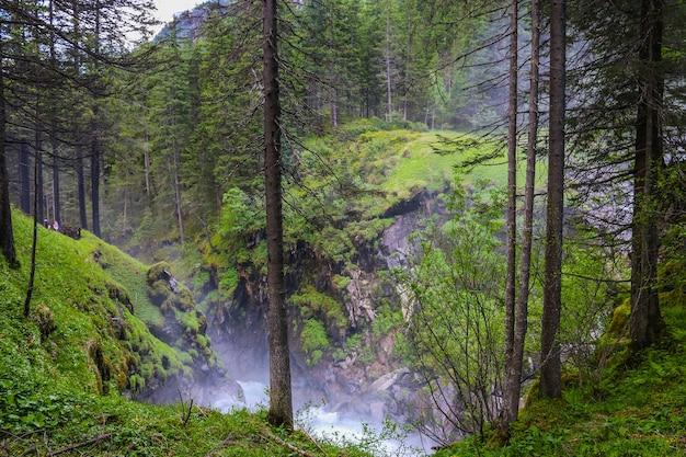 신비하고 어둡고 오래된 숲을 걷습니다. 오스트리아의 가을 화창한 아침 날