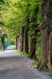 큰 나무가 늘어선 공원길을 걷습니다.