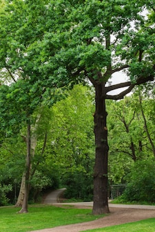 따뜻하고 화창한 날 베를린의 volkspark friedrichshain 공원, 아늑한 길과 푸른 잔디에서 산책