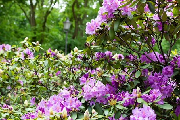 ベルリンのフォルクスパークフリードリッヒスハイン公園、緑の芝生、美しい花で暖かい晴れた日に歩きます
