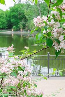 公園の暖かい晴れた日に歩くフォルクスパークフリードリッヒスハイン、公園の湖