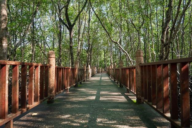 Прогуляйтесь по мангровым лесам в азии. Premium Фотографии