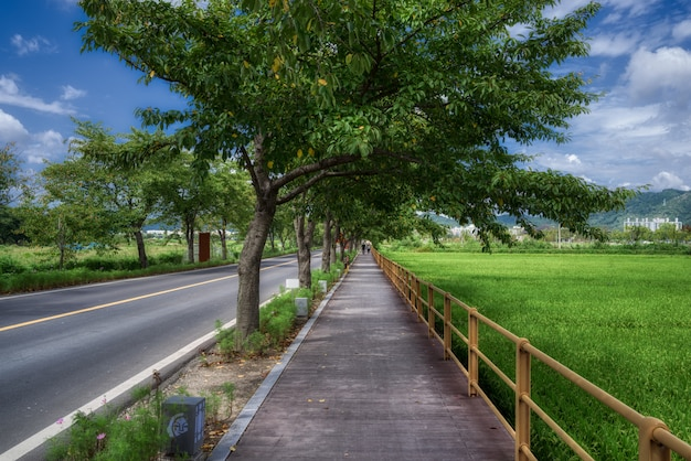 한국 전주 도로 옆 논밭을 걷다