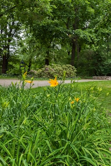 Walk on a warm sunny day in the park volkspark friedrichshain in berlin, green lawns and beautiful flowers