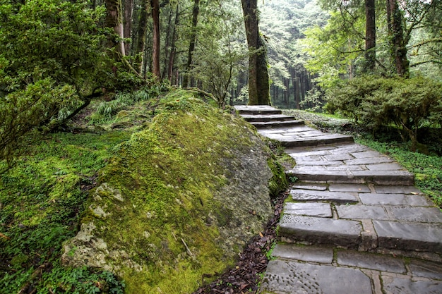 The walk way at alishan national park area in taiwan.
