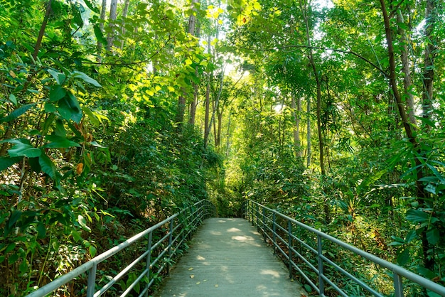 Walk way in the forest at canopy walks at queen sirikit botanic garden chiang mai, thailand