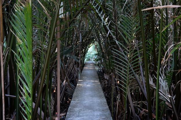 늪지대의 정원에서 숲속 야자 외관을 걸어