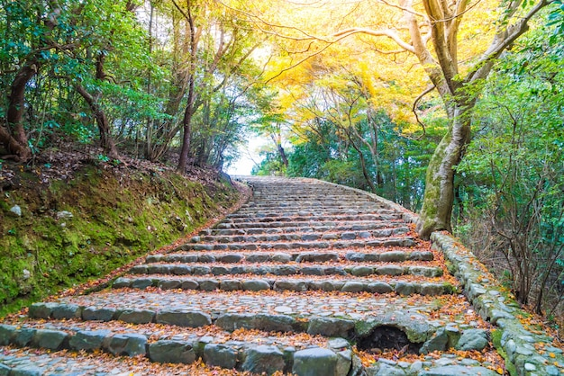 Walk way with red maple leaves blooming at arashiyama
