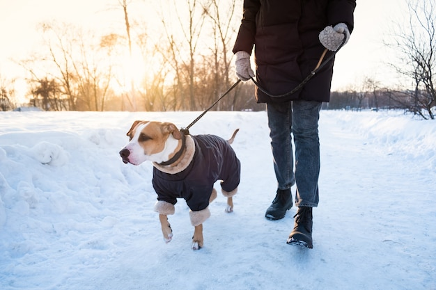 Walking the dog on cold winter day. person with a dog in warm clothing on the leash at a park