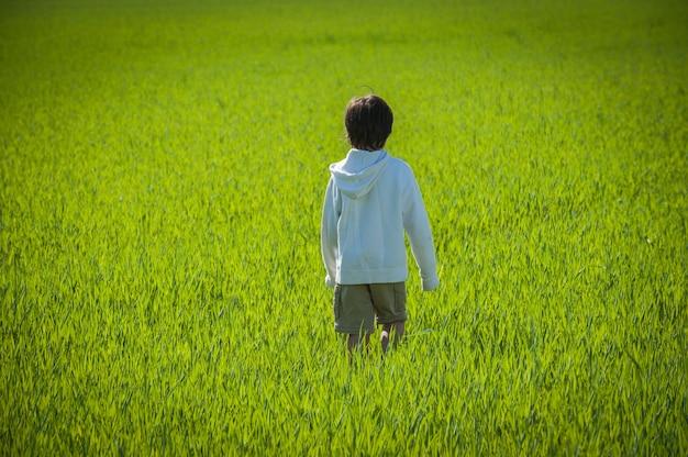 緑色の黄色の草原に歩く子供