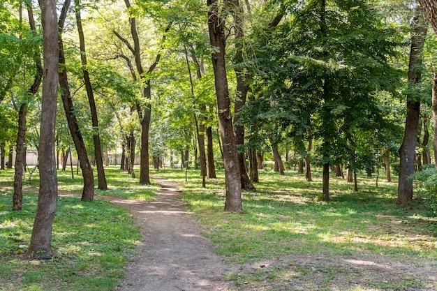 緑の木々に囲まれた公園の散歩道