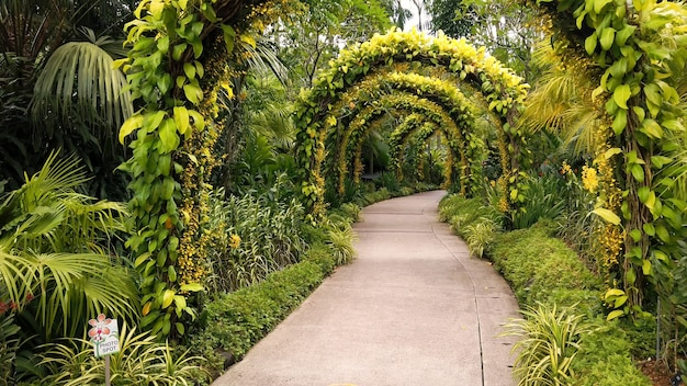 Walking path with large arches covered with green bush leaves in tropical park