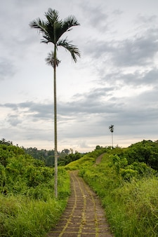 Walking trail between palm trees.
