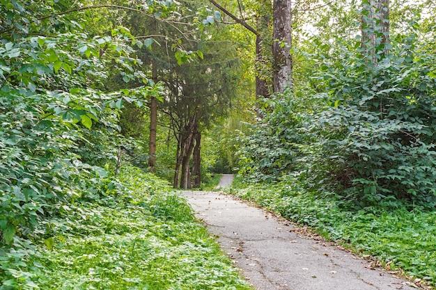 Пешеходная тропа тропических лесных деревьев, кустарников. красивый зеленый лес летом