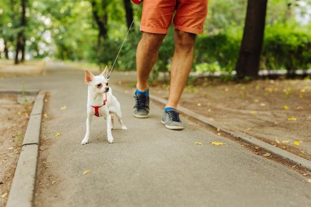 강아지와 함께 산책. 밝은 빨간색 반바지와 작은 강아지와 함께 걷는 편안한 파란색 운동화를 입은 남자
