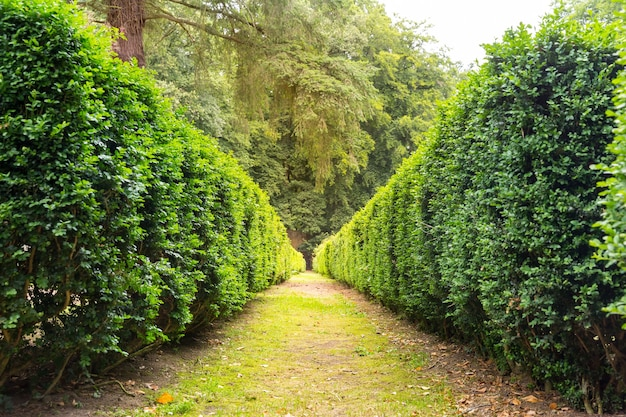 잘린 덤불 사이의 산책로, 유럽의 여름 공원. 전문 원예, 유럽 녹색 풍경, 정원 식물 장식