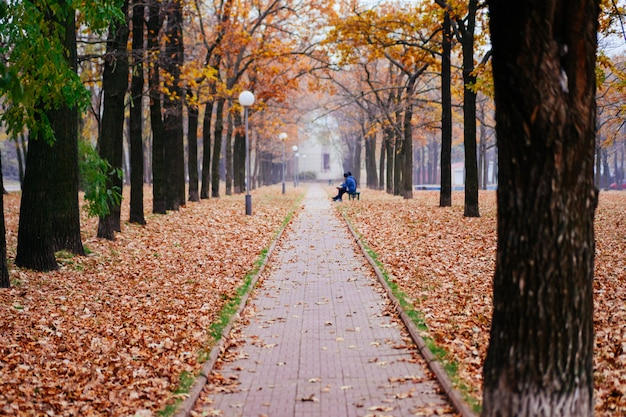 Walkway in the autumn park on a cloudy day