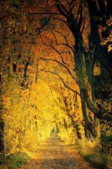 노란 나무 사이의 산책로