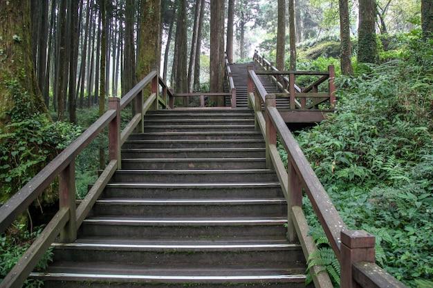 The walkway from wood in alishan national park at taiwan