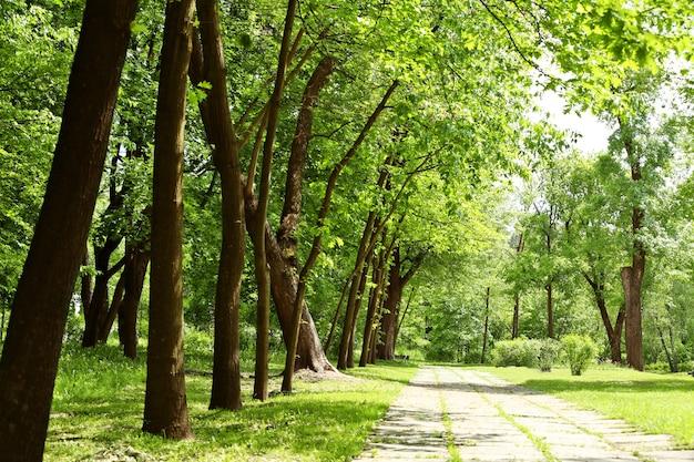 여름 공원 산책로