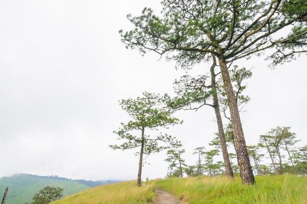 Phu soi dao 국립 공원, uttaradit 주, 태국에있는 숲의 산책로