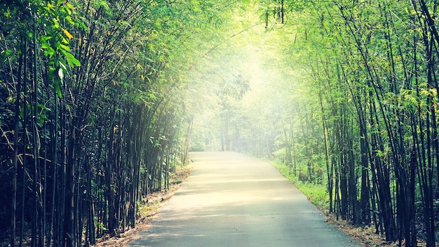 Walkway lane path with green trees in forest
