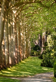 Walkway lane path with green trees in forest.