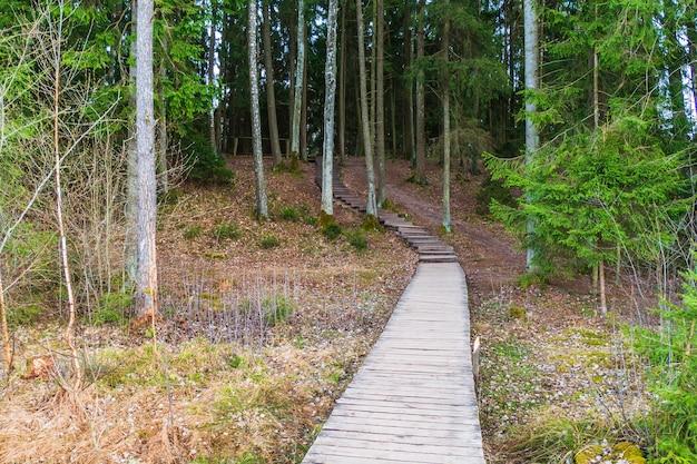 木とマングローブ畑から作られた歩道。