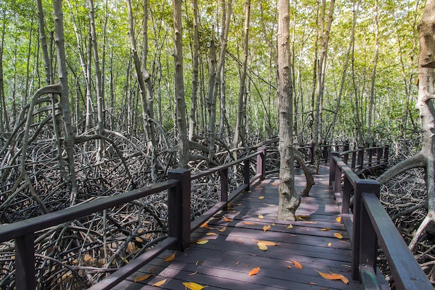 Прогулка по мангровому лесу в национальном парке пранбури, таиланд