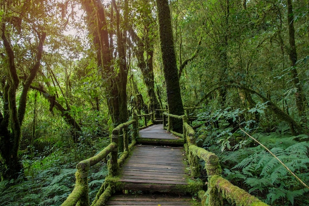 Walkway in the rainy forest