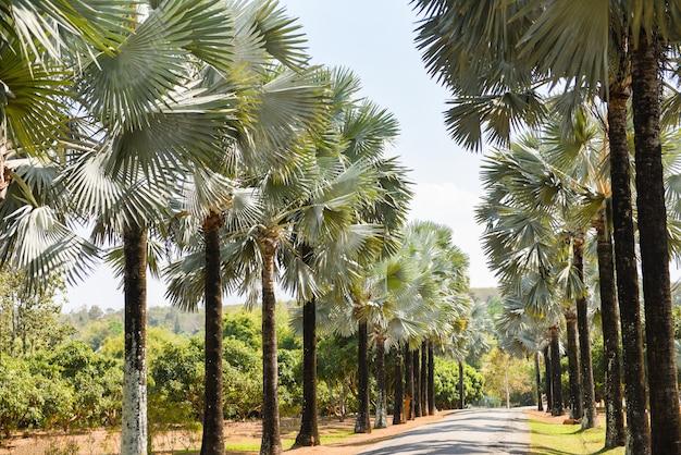 熱帯の夏のヤシの木と歩道