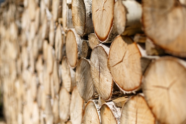 Wall for background of smooth round slices of birch