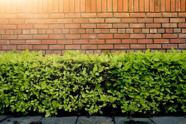 日光と公園の壁のレンガと緑の茂み。