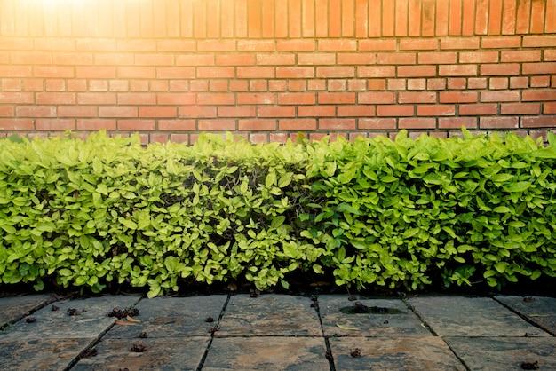 壁のレンガと緑の茂みが公園の地面のコンクリートの上にハードな日光を浴びています。建築と装飾。 Premium写真