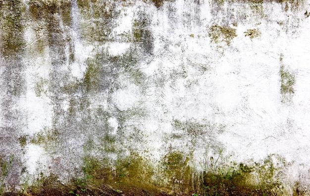 Стена покрыта большим количеством плесени
