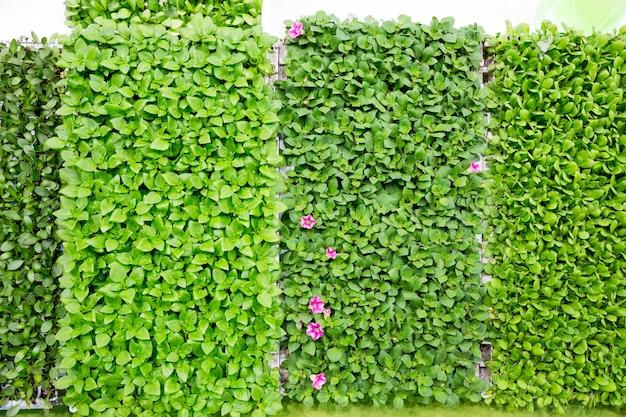 신선한 녹색 잎으로 덮여 벽