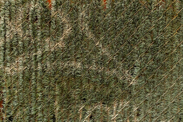 Wall decorated with pine leaves
