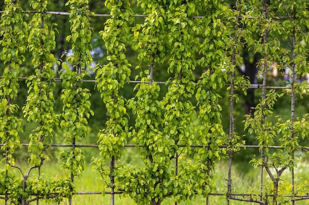 나무 바와 나뭇잎의 정원에 있는 벽. 고품질 사진
