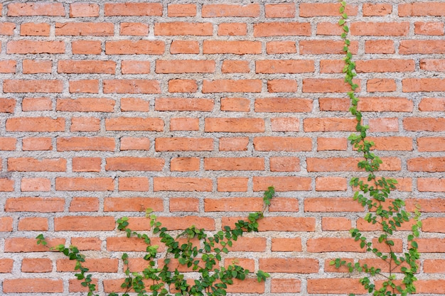 The wall is made of brick and then painted in white
