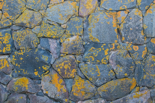 Wall of large natural stones, covered with yellow beautiful moss. great for design and texture background.