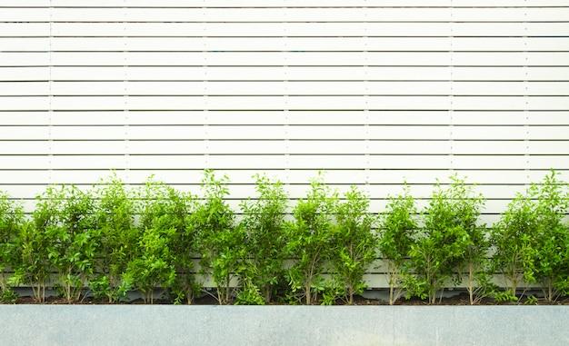 壁は緑色の植物で白い木のフェンスを形成した。