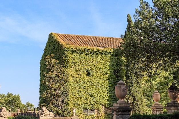 緑のツタのクリーパー植物で覆われた古いヴィンテージの家の壁。ラベリントドルタパーク。