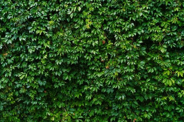 低木の壁と成長する植物