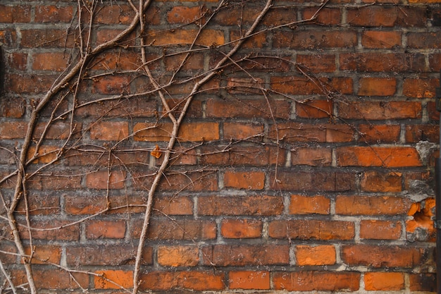 Wall of old red brick building, overgrown with vines and ivy