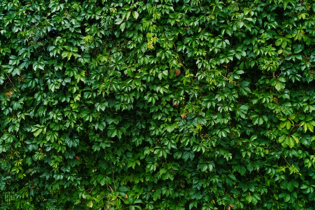 Wall of shrubs and growing plants
