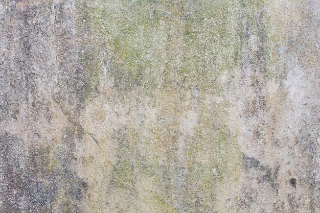 緑のカビと表面の汚れのある壁。
