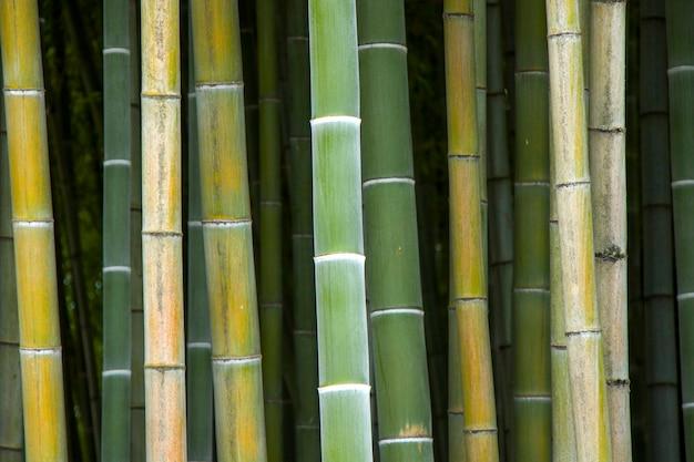 壁紙と自然の、トビリシ植物園のバモックの木。