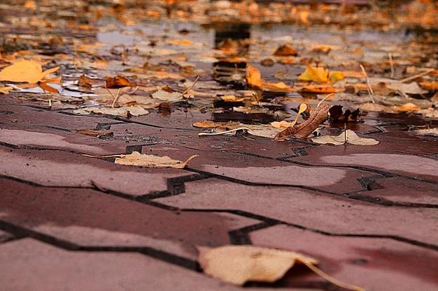 벽지 가을 단풍은 비가 내린 후 보도에 사람이 없습니다.